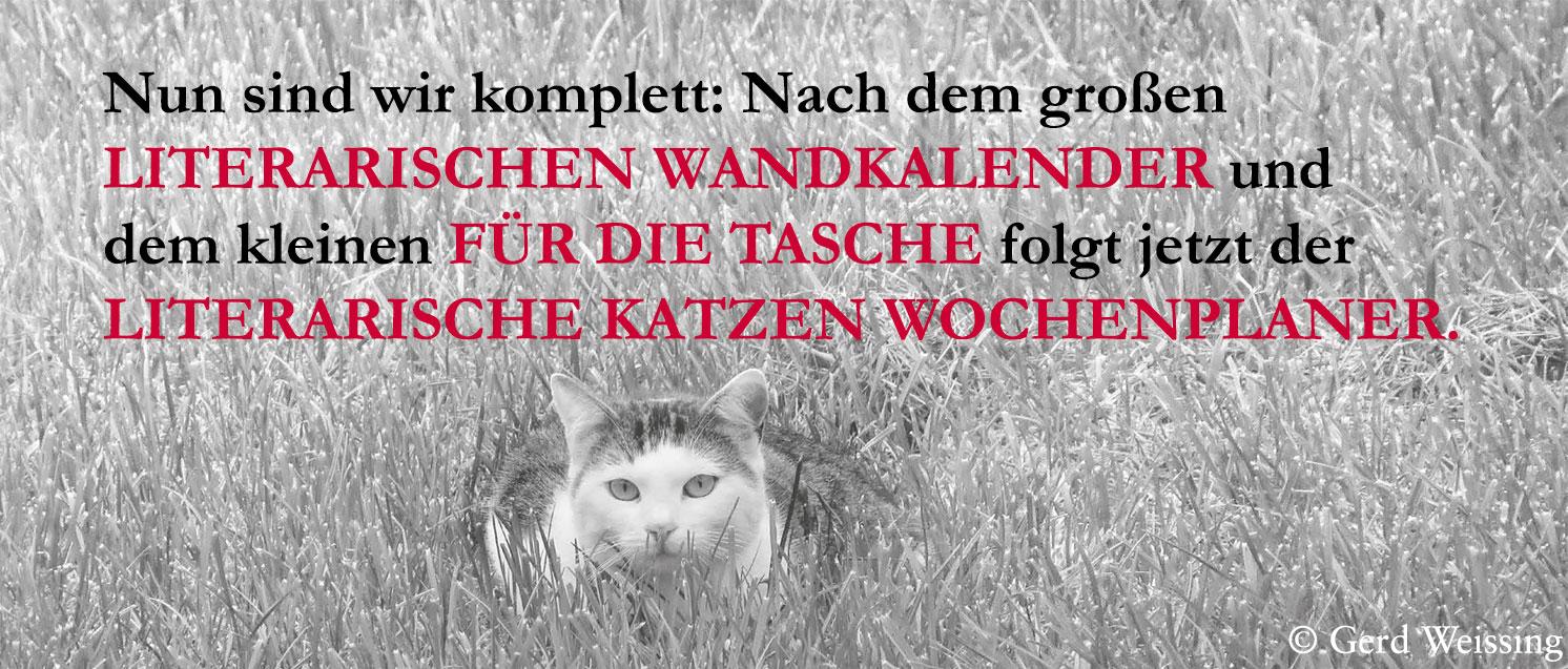 Slider Katze 1